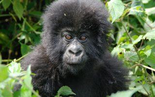 7 Days Cheap Uganda Primates Safari