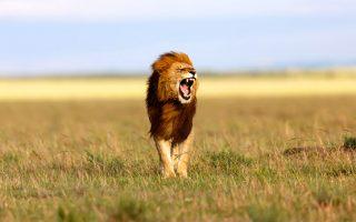 3 Days Masai Mara Wildlife Safari