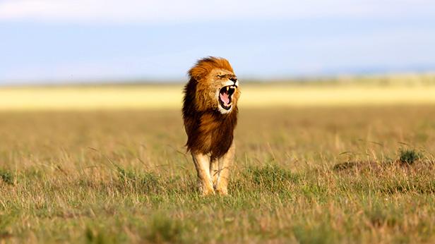 6 Days flying safari to Bwindi and Masai mara Safari