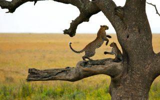 3 Days Serengeti Wildlife Safari