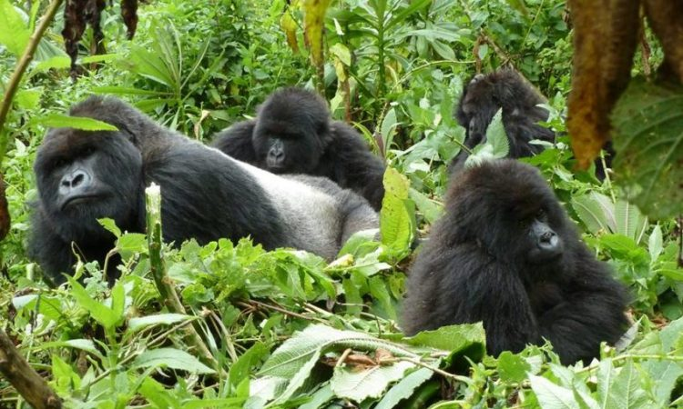 7 Days Rwanda Primates Escapade