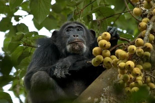 7 Days Uganda safari