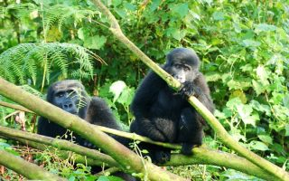 How to Access Bwindi Impenetrable National Park by road