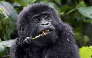 18 Days Uganda Rwanda safari
