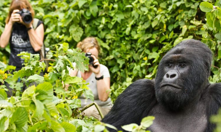 5 Days Combined Gorilla Experience