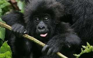 7 Days Flying Primate Safari