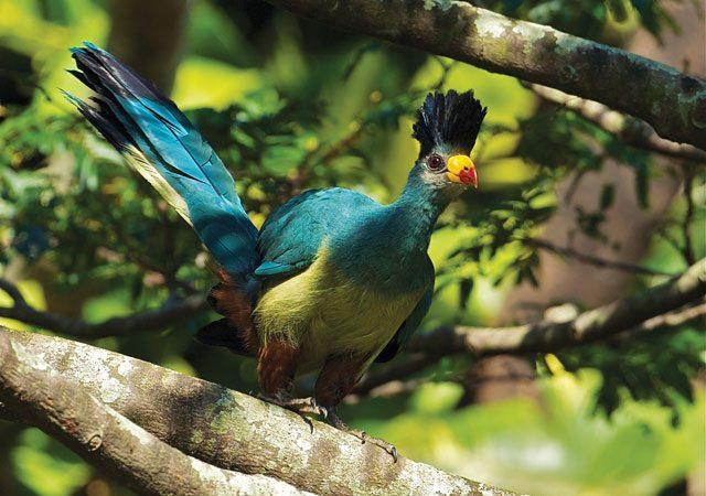 Top 10 Ugandan Birds