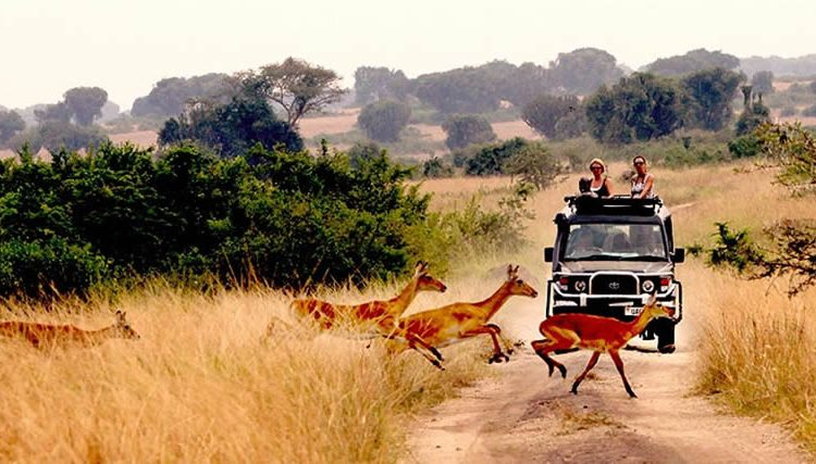 Uganda Travel Tips