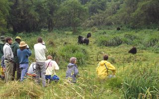Rules and Regulations, Dos and Donts of Gorilla Trekking