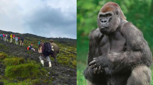 4 Days Congo Gorillas and Nyiragongo Hike