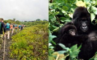Nyiragongo Hike and Kahuzi Biega