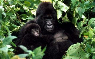 3 Days Virunga National Park