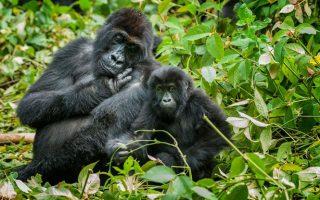 5 Days Congo Mountain Gorillas and Kahuzi Biega