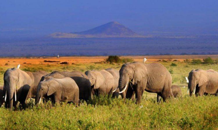 6 Days Amboseli national park and Maasai Mara national park