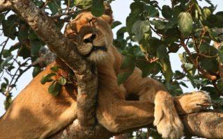 13 Days Luxury Uganda Safari