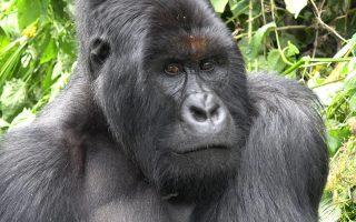 10 Days Uganda & Kenya Safari