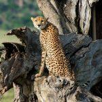 4 Day Kidepo Wildlife Safari