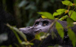 4 Days Le Petit Virunga Safari