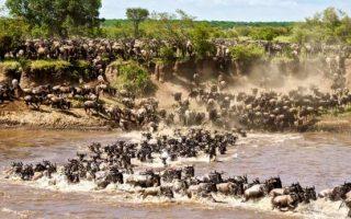10 Days Best Wildebeest Migration & Rwanda Safari