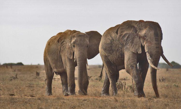 3 Days Tsavo East Wildlife Safari