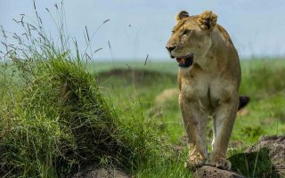 3 Days Tsavo West Wildlife Safari