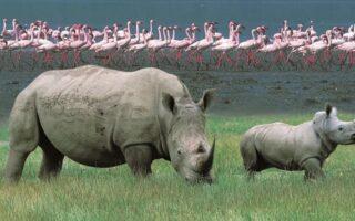 3 Days lake Nakuru National park wildlife safari