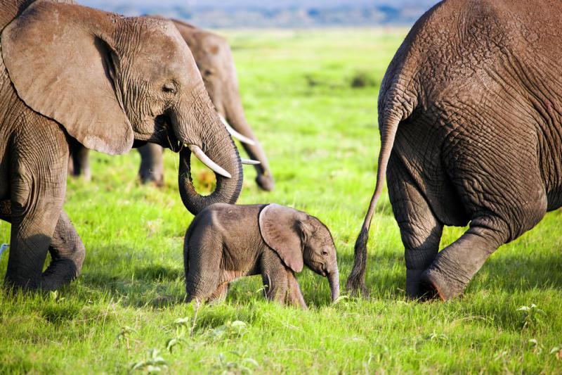 4 Days Amboseli and Lake Naivasha wildlife safari