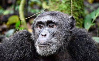 4 Days Kibale and Semiliki national park safari