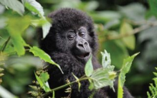 6 Days Congo Gorilla Trekking & Mount Nyiragongo Hike
