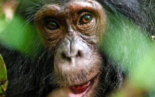 7 Days Uganda Rwanda Wildlife & Primate safari