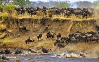 8 Days best of Kenya, Tanzania, and Rwanda safari