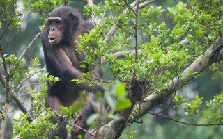 5 Days Nyungwe Forest & Mount Nyiragongo hike