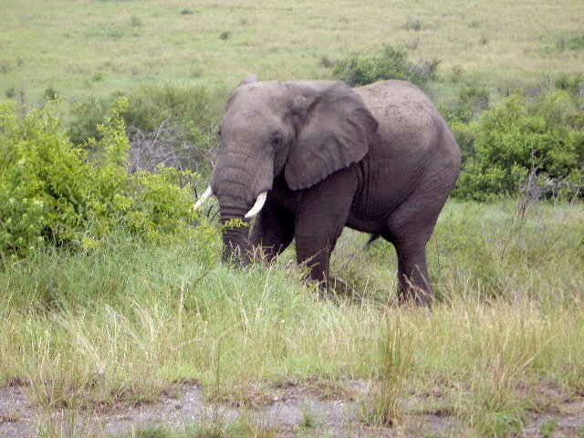 Problems Facing Tourism in Uganda