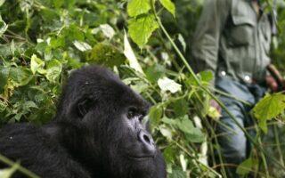 7 DaysRwanda Primates & Dian Fossey hike