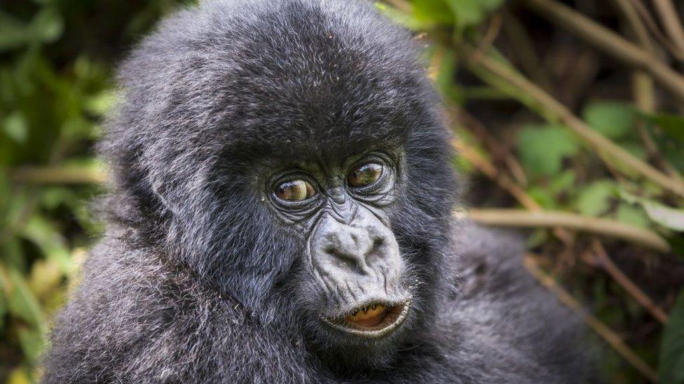 11 Days Best of Tanzania, Kenya and Uganda Safari