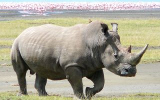 7 days Kenya Tanzania wildlife safari