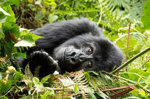 5 Days Virunga and Akagera National Parks Safari
