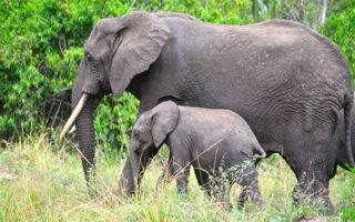5 Days Murchison falls Wildlife Safari
