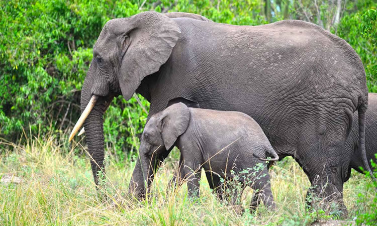 5 Days Murchison falls Wildlife Safari