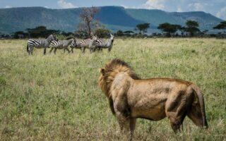 11 Days Kenya Wildlife Safari & Beach tour