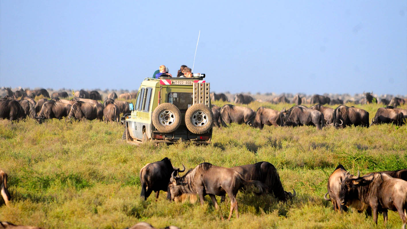 9 Days best of Northern Tanzania safari