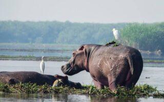 6 days Queen Elizabeth and Murchison falls wildlife Safari