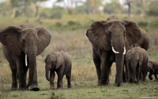 20 Days Best Of Uganda Wildlife Safari
