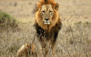 13 Days Best of Uganda Safari