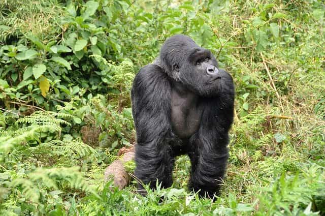 4 Days Rwanda Gorilla Trekking & Bisoke Hike