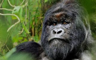 4 Days Rwanda Gorilla Trekking Safari and Mount Karisimbi Hike