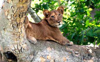 5 Days Queen Elizabeth and Lake Bunyonyi Safari