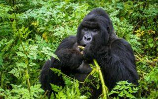 8 Days Uganda Luxury Safari from Kigali