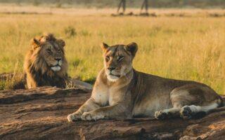 15 Days Best Uganda Safari Tour