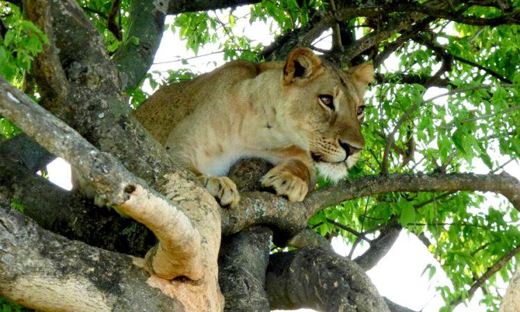 30 Days Rwanda, Uganda, Kenya, & Tanzania Safari